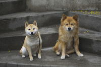 sakura&waku(3cut) ちょっとひと休み -     ~風に乗って~    Present