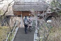 名残の梅 - 木洩れ日 青葉 photo散歩