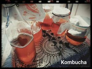 セレブも好むKombucha - PALOS CLOTHING フィットネスブログ