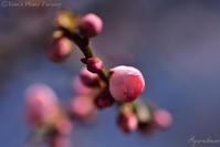 春の便り、届く・・・ - Tom's Photo Gallery~写楽庵~