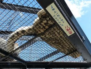 旭山動物園残った写真をちょっとだけ - ピアノ教室の風景