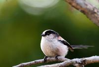 梅次郎以外にも野鳥が一杯 - スポック艦長のPhoto Diary