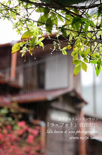 """カメラが恋する鎌倉:小町通り、降る雨は糸か針か。SEL55F18Z一本勝負。 - 東京女子フォトレッスンサロン『ラ・フォト自由が丘』の""""恋するカメラ"""""""
