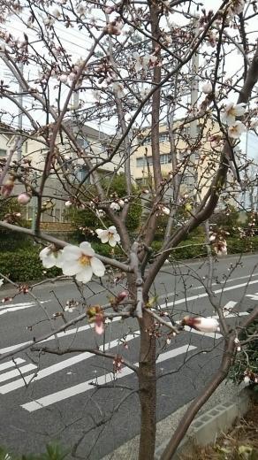 開花~☆ - Entrepreneurshipを探る旅