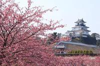 掛川城と掛川桜~1~♪ - happy-cafe*vol.2