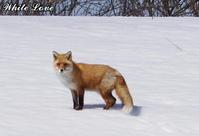 冬~春 - White Love