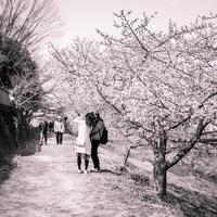 2017年3月26日 河津桜を背景に記念写真を撮る家族 - Silver Oblivion