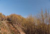 山田の丘 - toshi の ならはまほろば