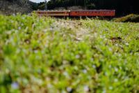 春色の土手に寝転がって…。① いすみ鉄道 - My B Side Life season2