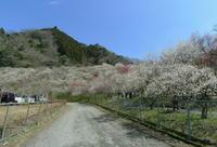 梅 - 写真巡礼「日本の風景」