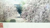桜咲く前に - 京都ときどき沖縄ところにより気まぐれ