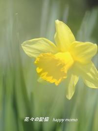 今日の春の花・・ - 花々の記憶