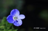 春の散歩道で・・ - 花々の記憶