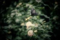 --- てふてふ --- - Rphotography