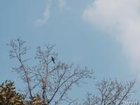 鳥を追う - NA*GO*美PHOTO