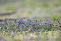 春爛漫な農耕地の花と小鳥 - healing-bird