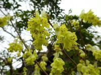 黄色の花 - NATURALLY