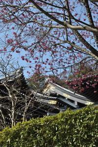 春の鎌倉 - pottering