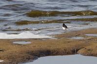 沼の鳥たちとマイガーデンの新しいお客様 - 季節の風を追いかけて
