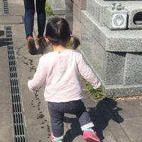 春の日…鎌倉湖畔 - 暮らしのエッセンス   北鎌倉の山の家から