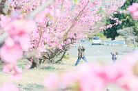 「空と桃」@花桃の丘 - カメラをもってふらふらと