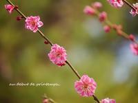それぞれの季節に咲かせる花・・・☆ - 花が教えてくれたこと
