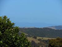 ブドウの収穫再開 - ニュージーランド田舎暮らし・島暮らし「Waiheke便り」