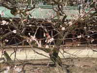 京都ウォーキング - さそり座だもの~星占い*ステラフォルテのブログ