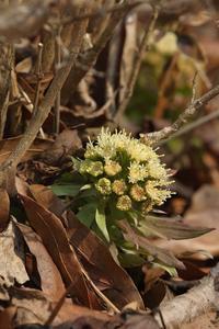 デンパーク~草花たち - miyabine's フォト日記2~身の周りのきれい・可愛い・面白い~