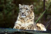 引っ越し後4年目の「スカイ」 - 動物園放浪記