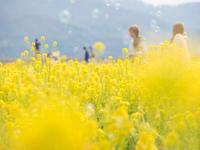 春夢ごこち - 風まかせ、カメラまかせ
