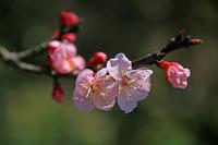杏のお城 - イーハトーブ・ガーデン