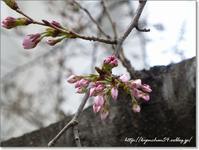春はそこまで - Have a nice day!