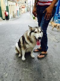 キューバの犬たち2017.3月 - マコト日記