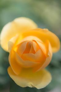 Spring yellow 3 - 気ままにお散歩