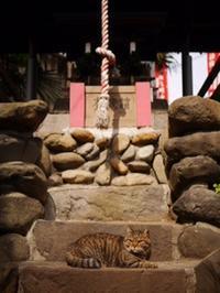 のんびり東京散歩~日暮里、西日暮里、谷中 - ひぐま家の生活