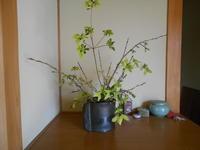 芽吹きの春 - 終の棲家のひとりごと♪