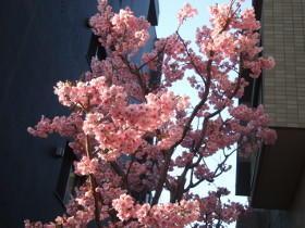 桜の種類もいろいろデス - るっこら * ひとり言
