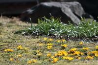 春近いと感じてきました。 - 平凡な日々の中で