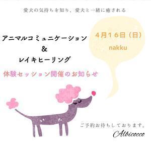 new nakku diary