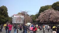 上野公園でお花見 - 手作りみつろう蜜蝋キャンドル|たかこのハーブ園