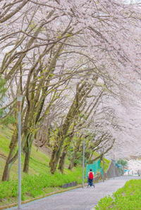 桜咲く - 幸せな写真時間