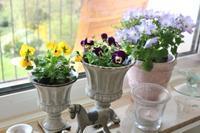 窓辺に春の鉢植えを☆ - ドイツより、素敵なものに囲まれて