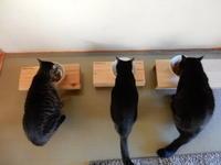 塗りまくってやったぜぇ! - ご機嫌元氣 猫の森公式ブログ
