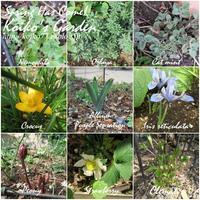 春の芽吹き 〜Spring Has Come〜 - 恋子のガーデニング日記
