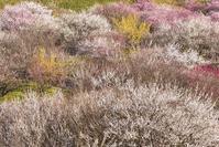 そろそろ春めいて - 四季燦燦 癒し系~^^かも風景写真