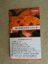 金盞花(キンセンカ)の生長日記 :その1 - 健気に育つ植物たち