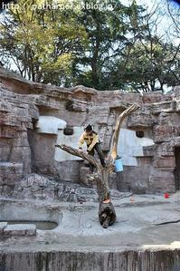 2017年3月 天王寺動物園 その3 他のクマたちにもオヤツ - ハープの徒然草