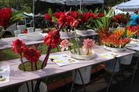ハワイの花ある風景⑥ファーマーズマーケット - クラシノカタチ