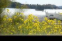 春の窓辺 - aya's photo